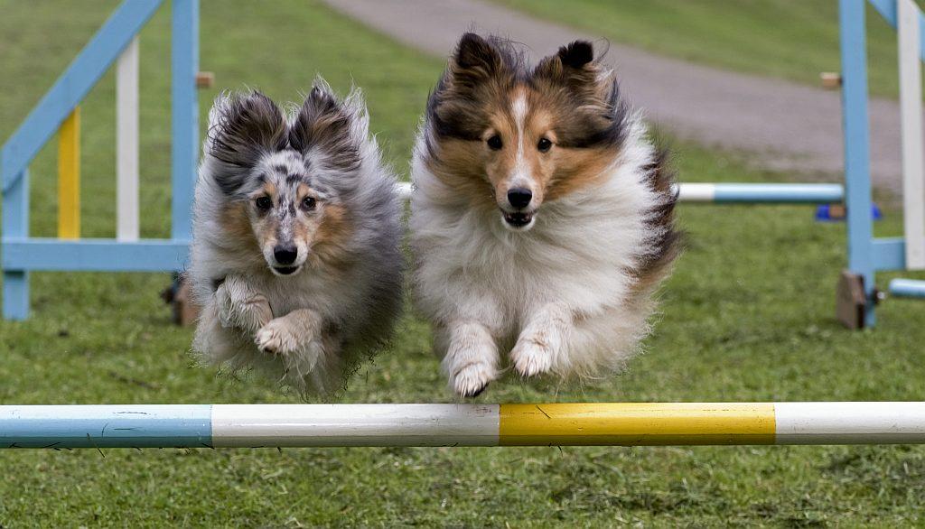 Hundesport - www.tag-des-hundes.de (c) O.Heil