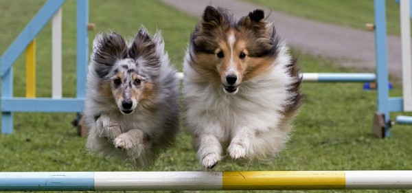 Hundesport - www.tag-des-hundes.de (c) O.Heil - Kopie