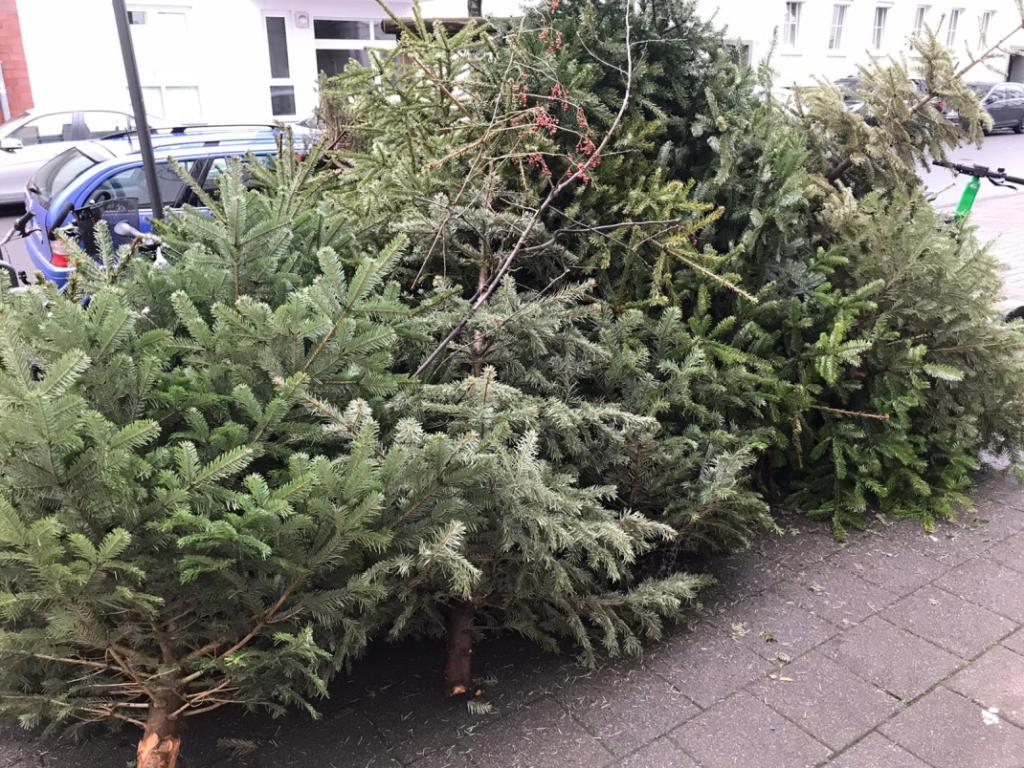 Abgeschmückte Weihnachtsbäume - RESORTI-Blog