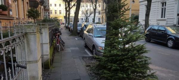 Tannenbaumentsorgung – von fliegenden Bäumen und nachhaltigen Alternativen