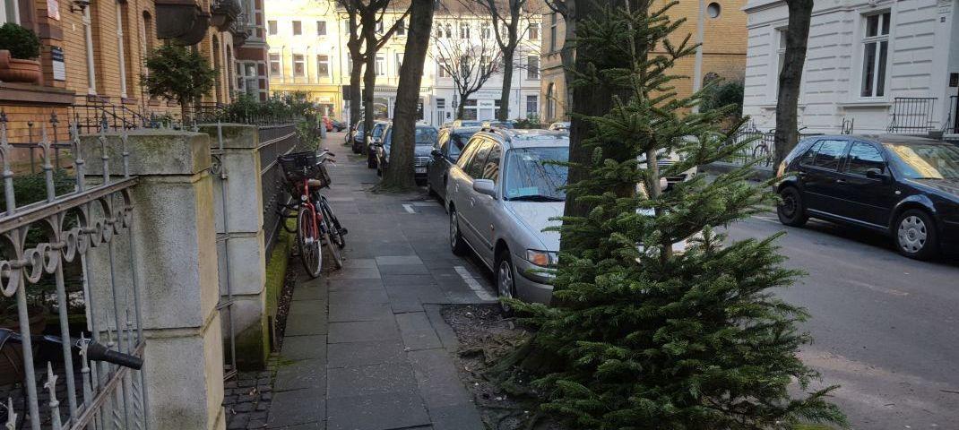 Tannenbaum an Straße - RESORTI-Blog