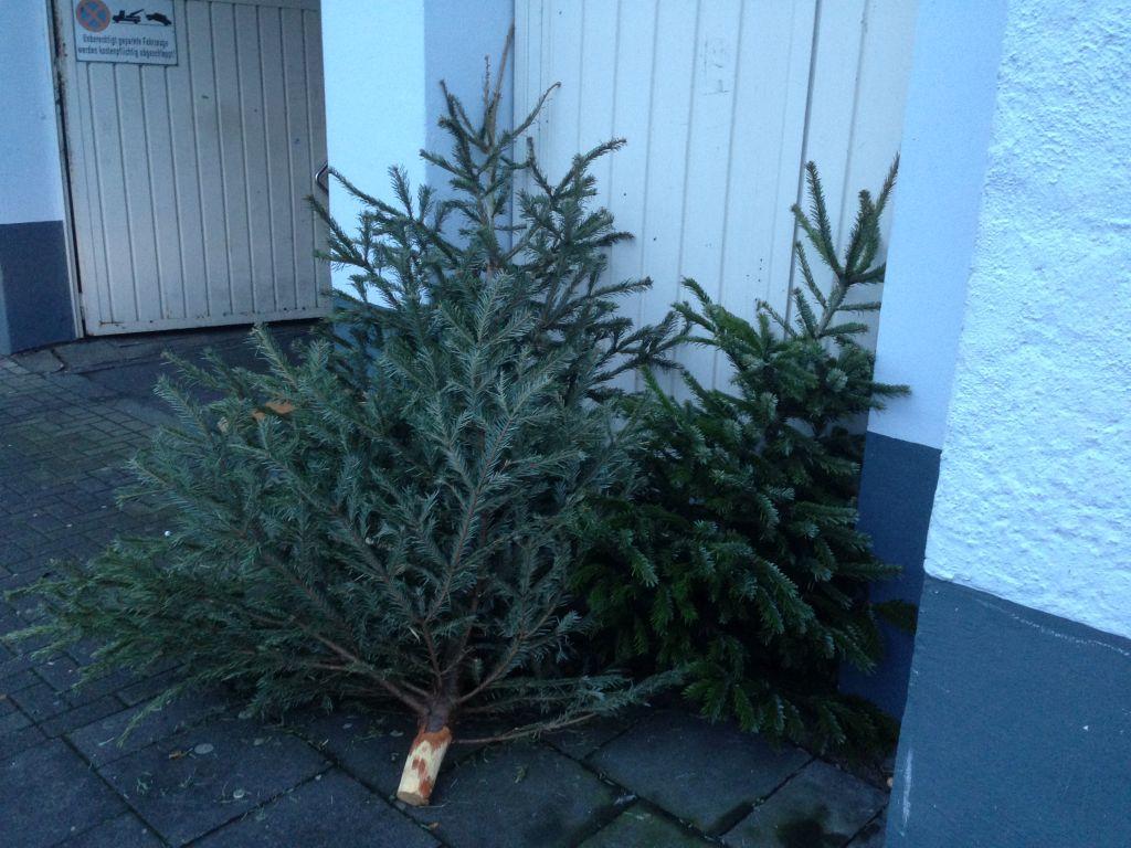 Weihnachtsbäume vor Garageneinfahrt - RESORTI-Blog