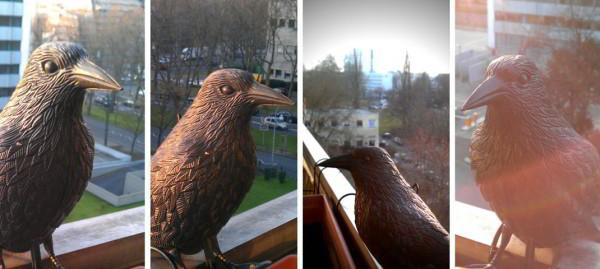 Krähenplage und verschmutzte Parks – vogelsichere Mülleimer als Lösung