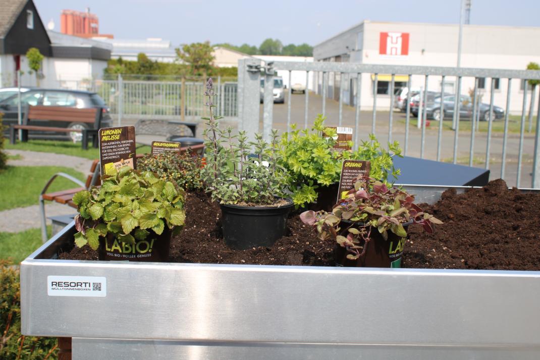 Mülltonnenboxen mit Kräutern bepflanzen - RESORTI-Blog