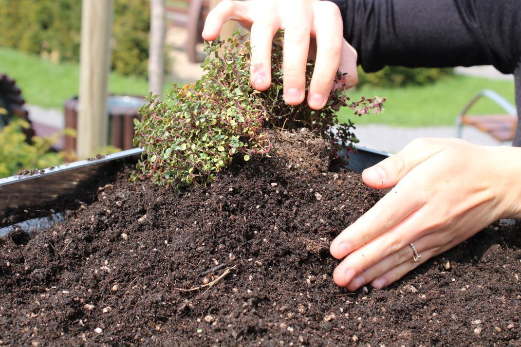 Mülltonnenboxen richtig bepflanzen - RESORTI-Blog