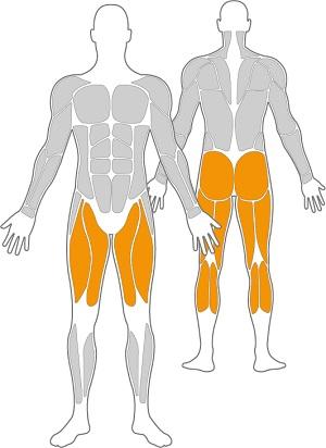 1-GOW-Freisport-Muskelgruppen-Outdoor-Fitness