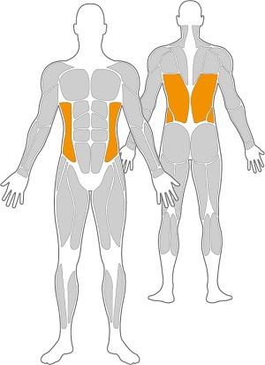 H-fttrainer-Inox-Muskeln