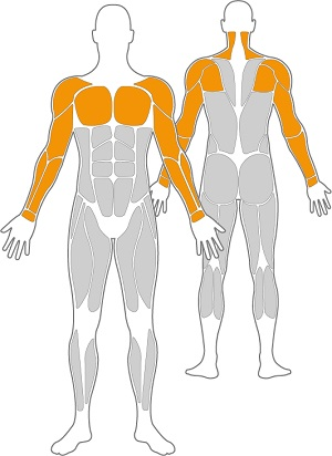 3-NSBAH-Freisport-Muskelgruppen-Outdoor-Fitness